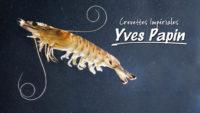 Vidéo Reportage Yves Papin - Crevettes Impériales